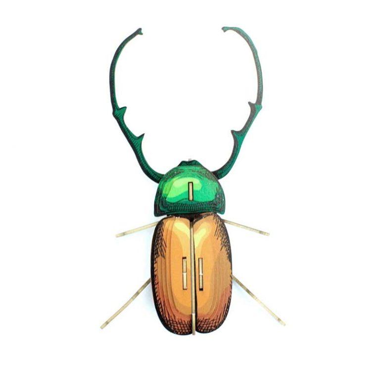 Insecte - Calingratus