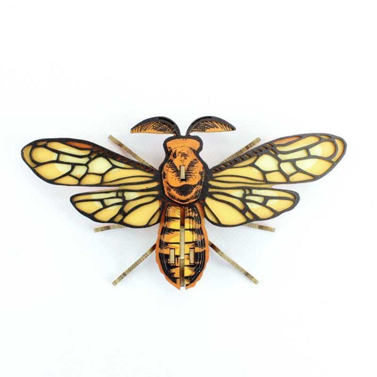 Insecte - Noctambulus