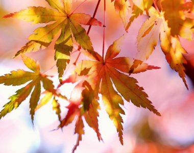 week-end d'automne