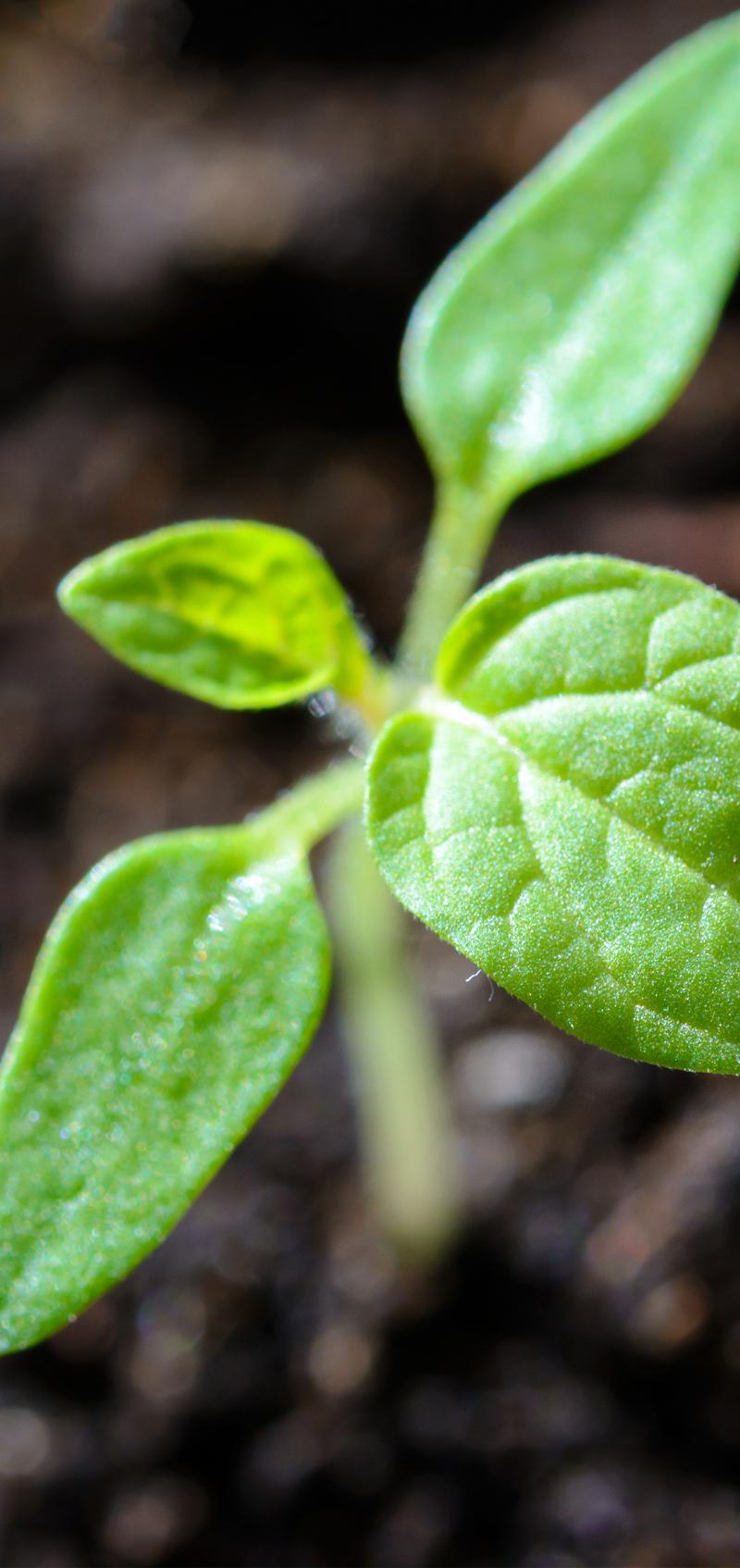 plante matiere sauvee